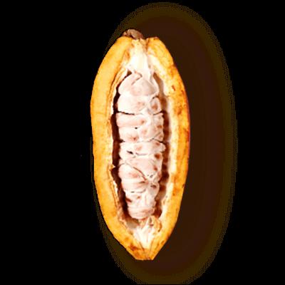 Dzeltena atvērta kakao pupa